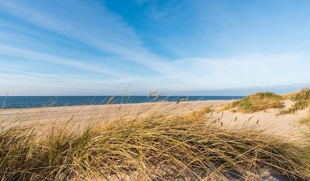 Hierba verde en una duna de arena en el mar báltico en yantarny rusia