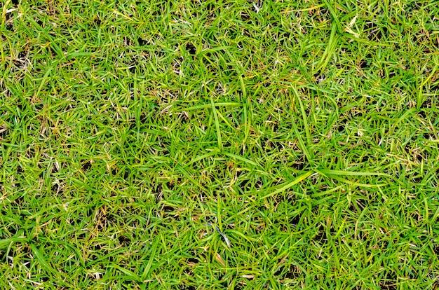 Hierba verde, espacio verde, verde