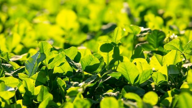 Hierba verde exuberante brillante en la luz del sol