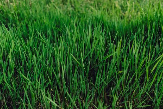 Hierba verde, fresca y alta