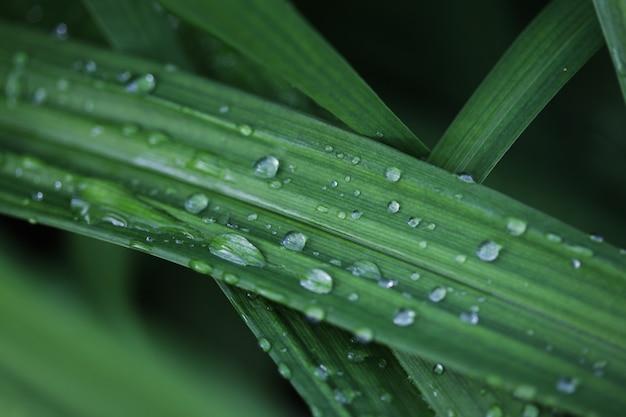 Hierba verde con gotas de agua