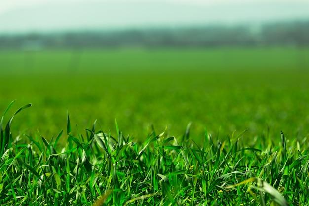 Hierba verde larga un prado en el patio trasero cerca del follaje orgánico del tema del día de la tierra