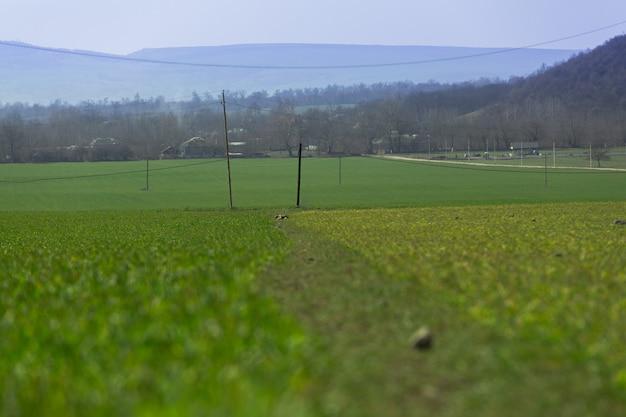 Hierba verde larga, un prado en el patio trasero de cerca. tema del día de la tierra, follaje orgánico. un estilo de vida saludable con una flora saludable.