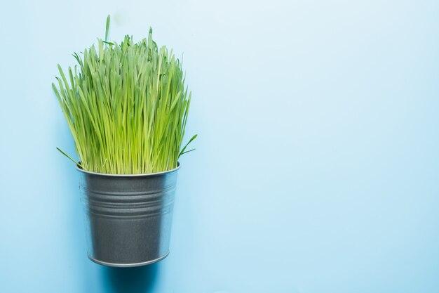 Hierba verde en maceta. concepto de primavera.
