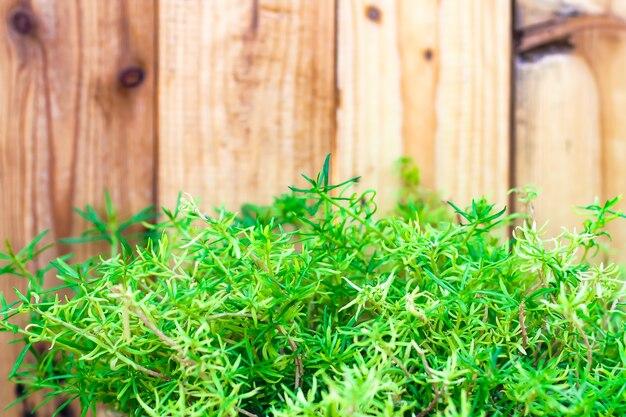 Hierba verde de manantial y planta de hojas sobre fondo de valla de madera. fondo de temporada de primavera de verano