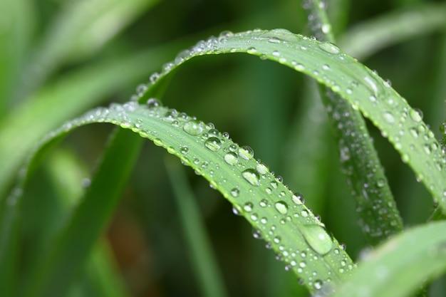 Hierba verde en la naturaleza con gotas de lluvia
