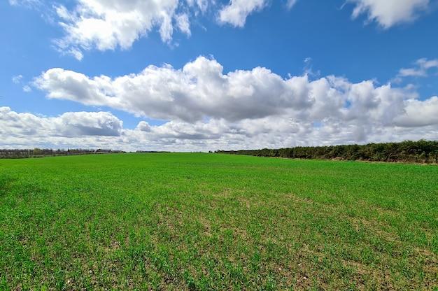 Hierba verde que crece en la pradera contra el cielo azul con nubes