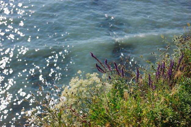 Hierba verde de verano en la playa del mar