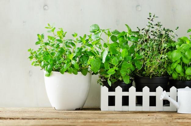 Hierbas aromáticas frescas verdes - melisa, menta, tomillo, albahaca, perejil en el fondo blanco. banner collage marco de las plantas.