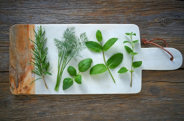 Hierbas aromáticas plantas culinarias romero hinojo.