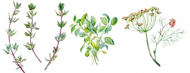 Hierbas aromatizantes