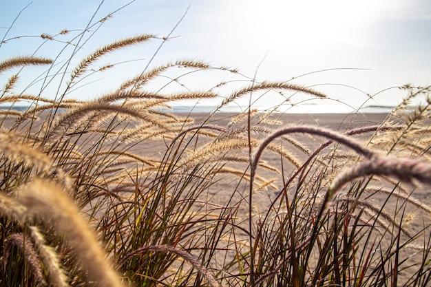 Hierbas de campo en la zona de la estepa en la luz del sol de cerca. naturaleza de verano.