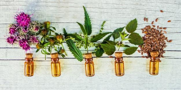 Hierbas medicinales. enfoque selectivo extracto de plantas naturales.
