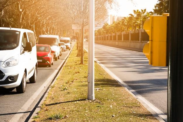 Hilera de árboles y vehículos en calle.