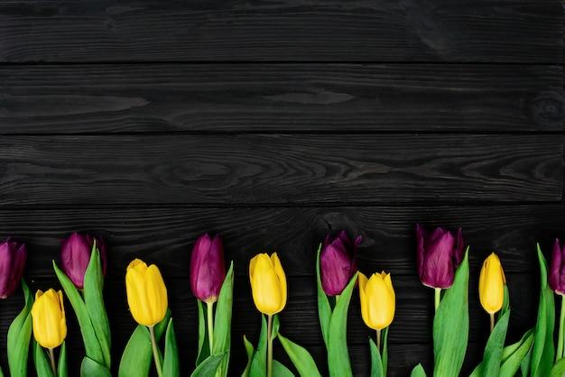 Una hilera de flores de tulipán amarillo y morado de primavera flat lay.