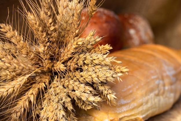 Hogaza de pan de trigo blanco y bollos con granos de trigo y espiguillas de trigo. copia espacio