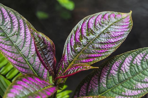 Hoja abstracta de belleza en el jardín