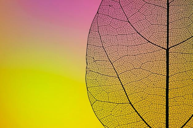 Hoja amarilla de otoño con espacio de copia