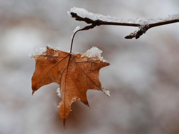 Hoja amarilla seca en la rama de un árbol cubierto de nieve