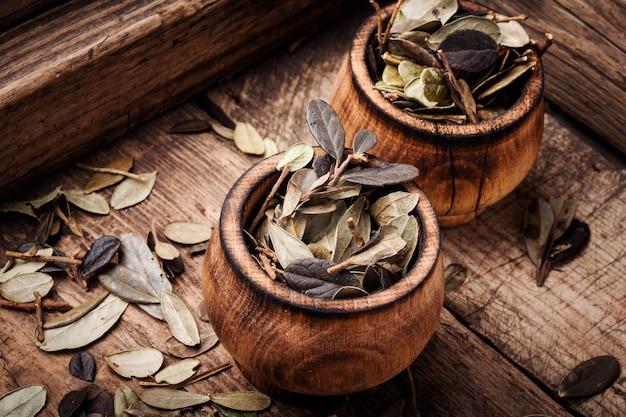 Hoja de arándano medicina herbal
