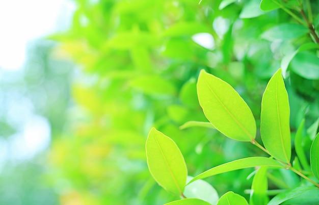 Hoja de árbol verde sobre fondo borroso en el parque con espacio de copia y patrón limpio