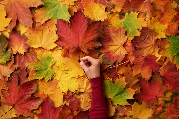 Hoja de arce en manos de la niña. fondo abstracto del otoño.