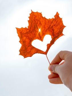 Hoja de arce naranja con corazón cortado en primer plano de mano femenina