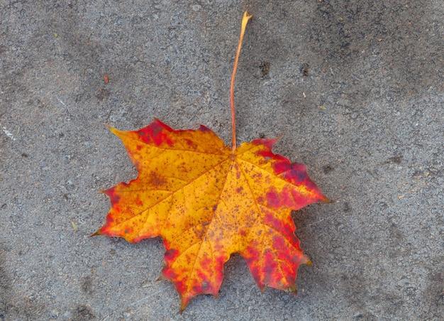 Hoja de arce naranja en el pavimento