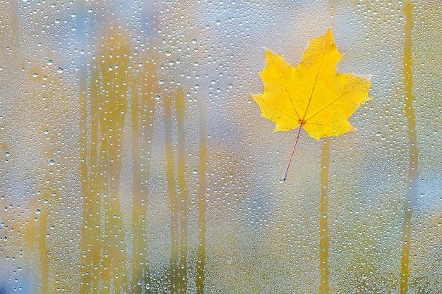 Hoja de arce otoñal sobre vidrio con gotas de agua