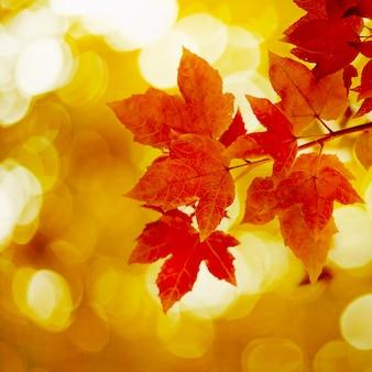 Hoja de arce roja en otoño.