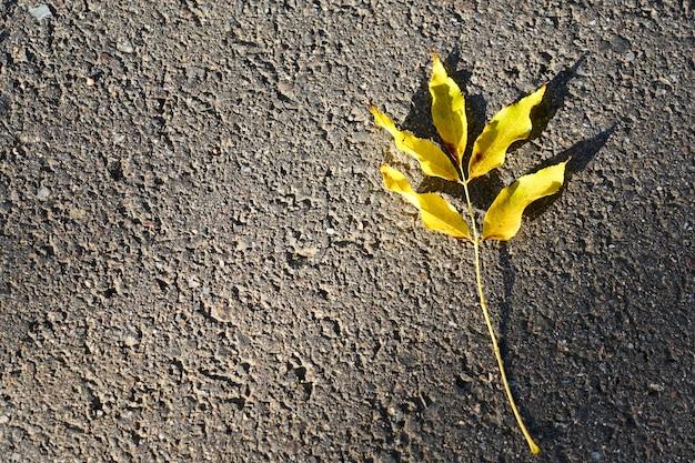 Hoja de autunm amarillo sobre un asfalto
