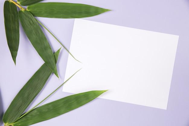 Hoja de bambú con tarjeta blanca en blanco.