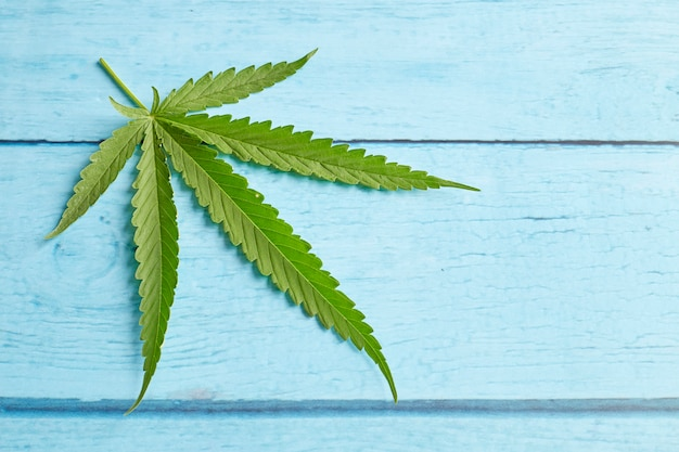 Hoja de cannabis sobre madera azul brillante.