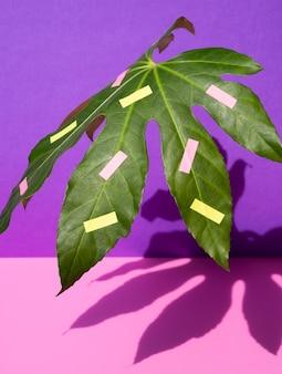 Hoja de castaño con fondo rosa y violeta contrastado