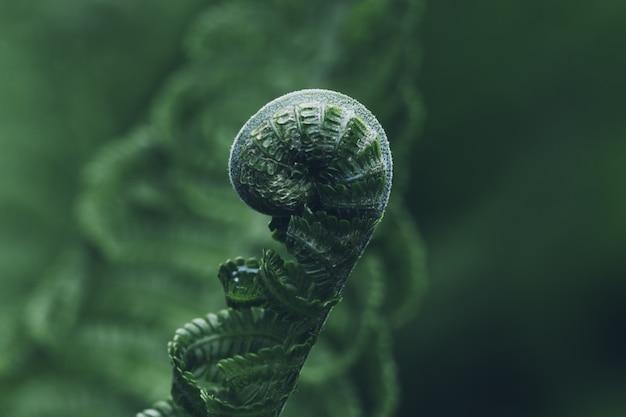 Hoja cerrada de helecho sobre un fondo verde, concepto de vida