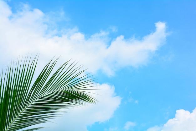 Hoja de coco de palma verde sobre fondo de cielo azul