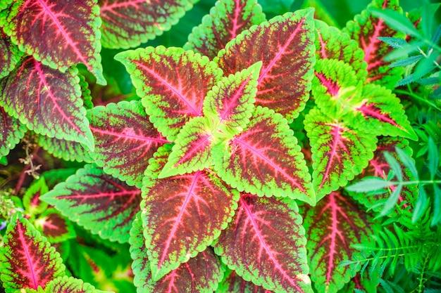 Hoja de color verde y rojo en el parque