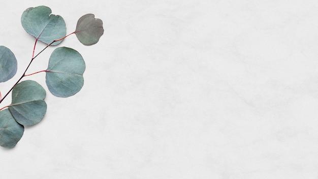 Hoja de eucalipto psd fondo de mármol blanco