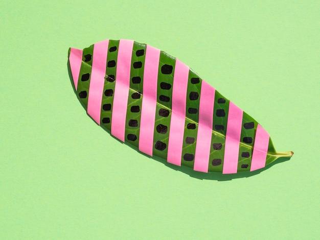 Hoja de ficus aislada con rayas rosas sobre fondo verde