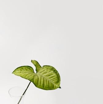 Hoja de follaje botánico con espacio de copia