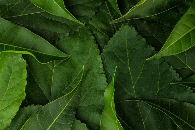 Hoja fondo textura primer plano planta