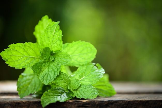 Hoja de menta - hojas de menta fresca en una naturaleza de madera verde