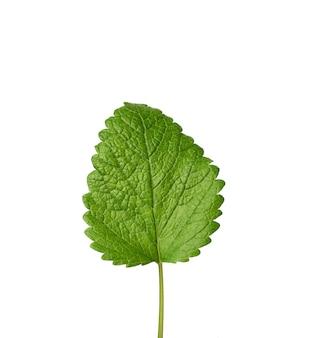 Hoja de menta verde aislada sobre un fondo blanco, especias aromáticas y refrescantes