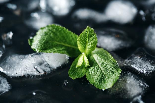 Hoja de menta verde fresca sobre hielo