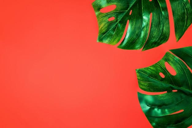 Hoja de monstruo, fondo tropical pastel