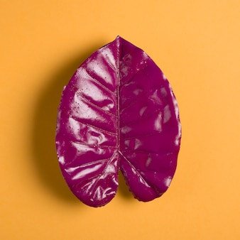 Hoja morada sobre fondo naranja