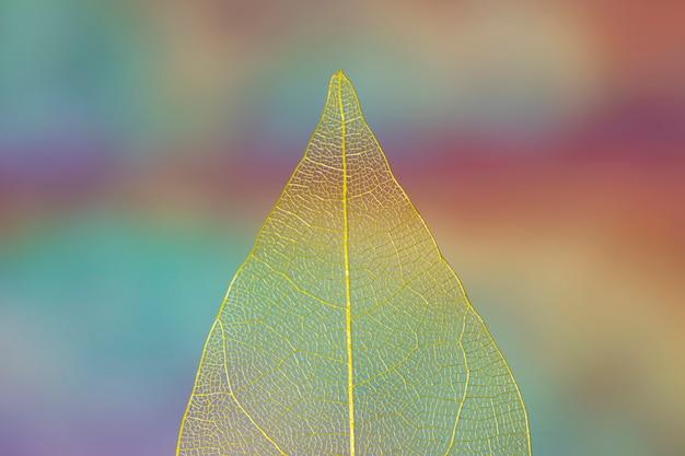 Hoja de otoño amarilla transparente vívida
