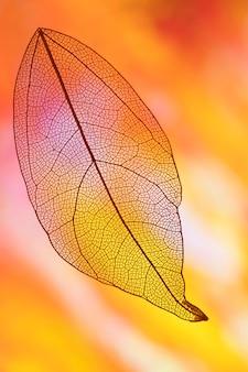 Hoja de otoño con amarillo y naranja.