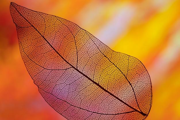 Hoja de otoño de color naranja vivo