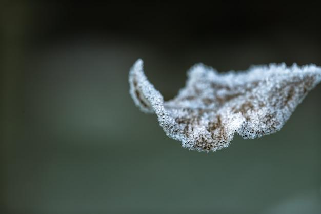 Hoja de otoño cubierta de cristales de hielo. temprano en la mañana en la estación fría.